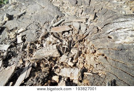 The photo shows background texture wood closeup fracture.