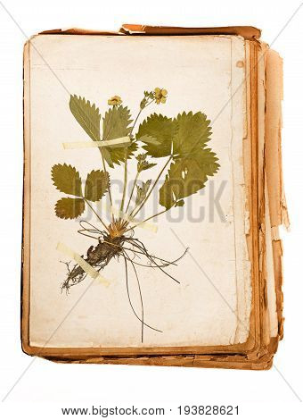 old book - plant on a Herbarium sheet