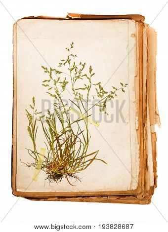 old book - plant in a Herbarium sheet