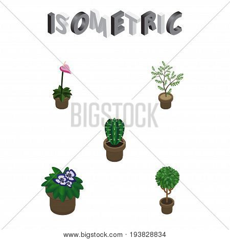 Isometric Houseplant Set Of Flowerpot, Grower, Fern And Other Vector Objects. Also Includes Cactus, Flower, Peyote Elements.