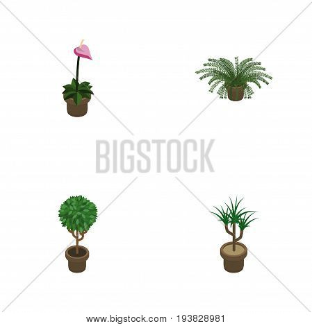 Isometric Houseplant Set Of Tree, Grower, Houseplant And Other Vector Objects. Also Includes Fern, Flowerpot, Pot Elements.