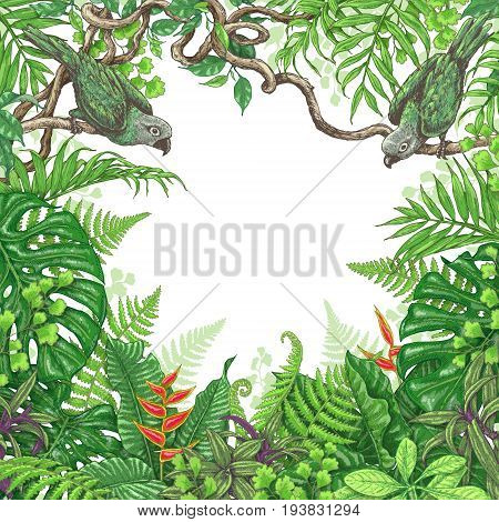 Hand drawn branches and leaves of tropical plants. Vivid square floral frame with birds sitting on liana branches. Vector sketch. Space for text.