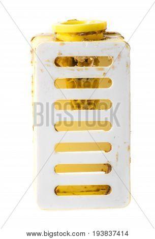 bee queen comb - Apis mellifera -Artificial breeding