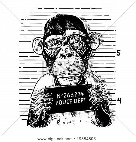 Monkeys in a T-shirt holding a police department table. Vintage black engraving illustration for poster.