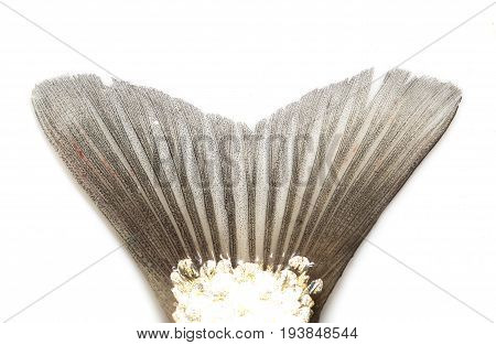 fish tail on a white background . A photo