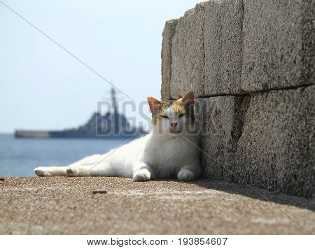 Lazy cat from the island of Rhodes rests in the shade on the waterfront