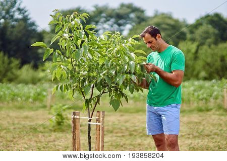 Caucasian Farmer By A Young Walnut Tree