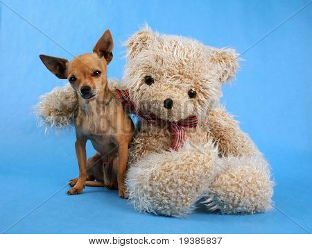 a teddy bear with his arm around a tiny chihuahua