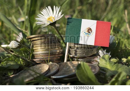 Mexican Flag With Stack Of Money Coins With Grass And Flowers