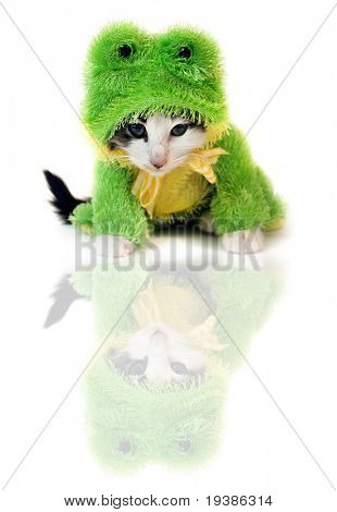 a tiny kitten in a Halloween costume poster