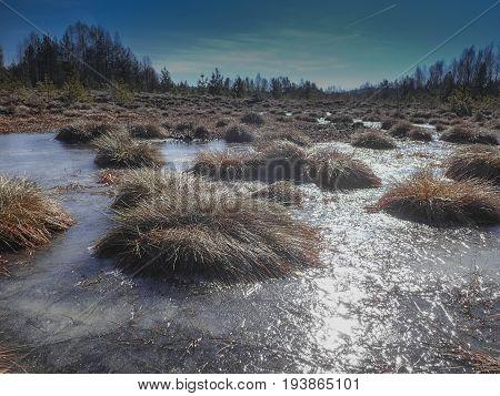 peat bog; peatbog landscape - Sumava Crech republic
