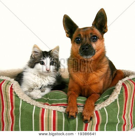 a dog and a kitten in a pet bed