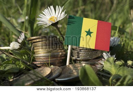 Senegal Flag With Stack Of Money Coins With Grass And Flowers