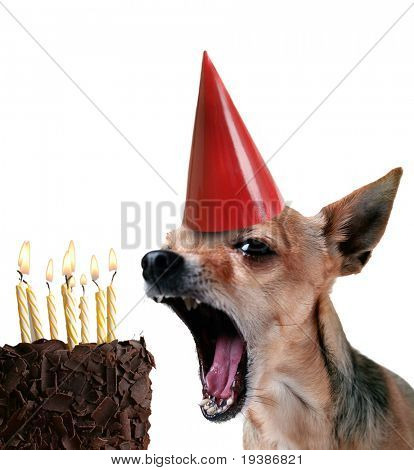a chihuahua blowing out candles on a piece of cake poster