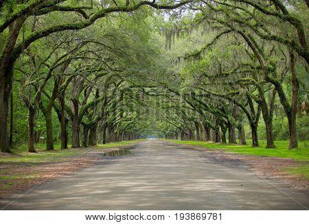 Oak Drive in Wormsloe Plantation, Savannah, Georgia
