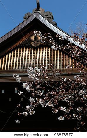 The index cherry tree in Tokyo, Japan, is found in the Yasukuni Shrine; so designated by the Japanese Meterorological Agency, when this tree blooms, the season begins. In 2017 it was in late March.