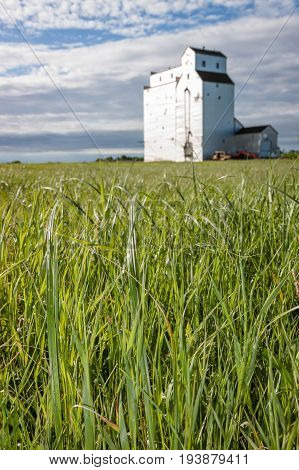 Wild Grass and Grain Elevator on Canadian Prairie and Blue Sky