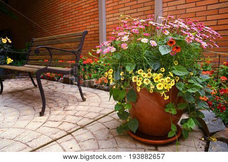 Pink daisies and yellow petunias in a container on a courtyard patio