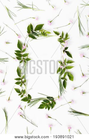 Flowers composition. Frame made of pink carnation flowers and needle-shaped and big astilba green leaves on white background. Flat lay top view.