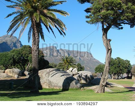 FROM CAMPS BAY, CAPE TOWN, SOUTH AFRICA, WITH PALM TREES AND BOULDERS IN THE FORE GROUND AND A MOUNTAIN IN THE BACK GROUND