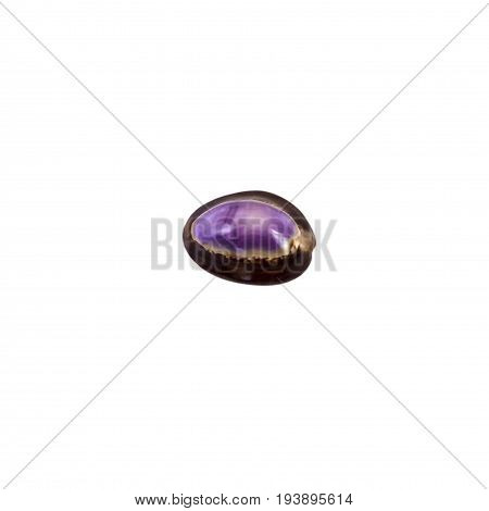 Beautiful Sea Shell,cypraea Annulus, Isolated On White Background For Posters, Sites, Business Cards