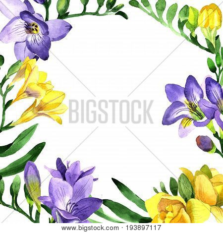 Wildflower fresia flower frame in a watercolor style. Full name of the plant: fresia. Aquarelle wild flower for background, texture, wrapper pattern, frame or border.