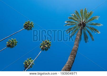 Palm Trees Against A Deep Blue Sky