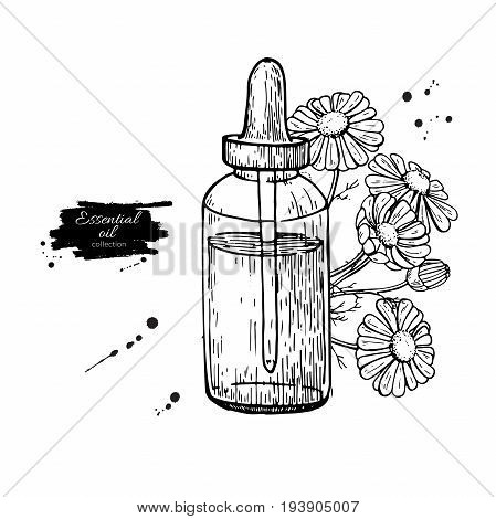 Chamomile essential oil bottle and bunch of flowers hand drawn vector illustration. Isolated drawing for Aromatherapy treatment, alternative medicine, beauty and spa, cosmetic ingredient. Great for label, poster, flyer, packaging design.