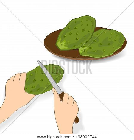 Edible green cactus leaves or nopales on white background. Hand drawn vector illustration adout preparing cacti food. Prickly Pear cactus paddles in human hand with a knife