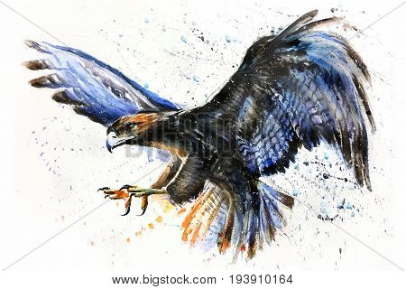 Eagle, watercolor, predator, animals, birds, wildlife, painting, falcon
