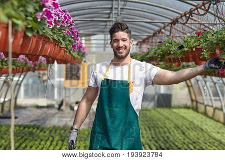 happy male nursery worker trimming plants in greenhouse