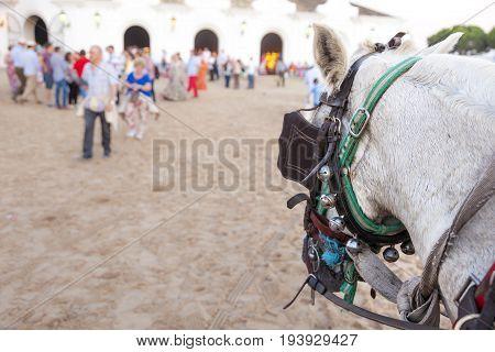 El Rocio Spain - June 4 2017: Andalusian horse in El Rocio during the Romeria 2017. Province of Huelva Almonte Andalusia Spain