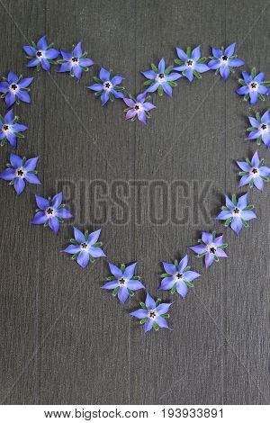 Blue edible borage flowers form a heart on a black background