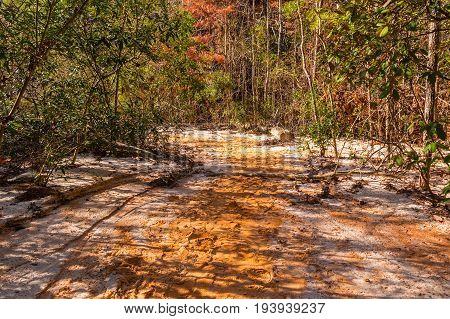 Red loamy and clay footpath and thicket at bottom of the Providence Canyon in sunny autumn day USA