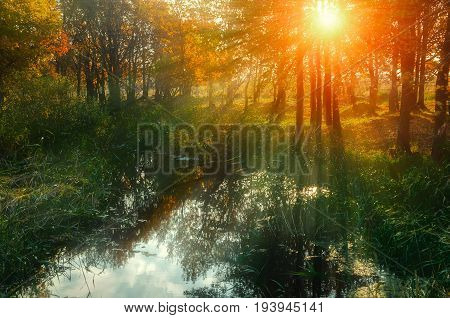 Autumn forest landscape with yellowed autumn trees and forest pond in sunset sunny autumn weather. Forest autumn nature in soft sunlight. Autumn forest trees with yellowed autumn leaves near the forest pond. Autumn landscape view of autumn nature