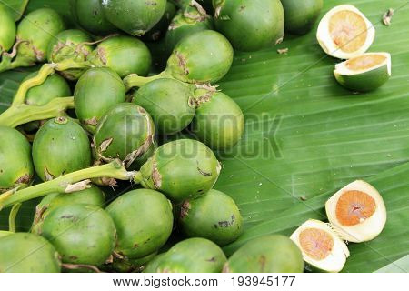 Betel parm on tree with the nature