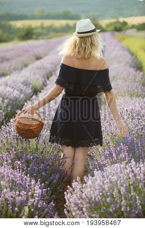 Woman with basket harvesting lavender, Woman with basket harvesting lavender, smiling, happy girl