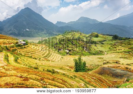Scenic View Of Terraced Rice Fields, The Hoang Lien Mountains