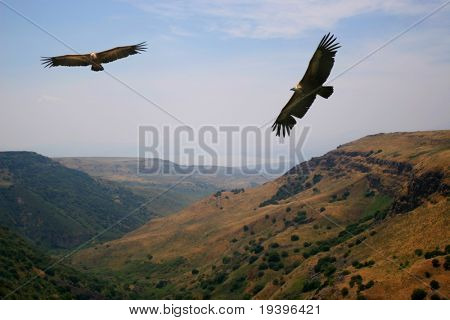 Eagles above mountains