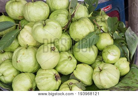 Guava fruits in the market. , fruit health for diet