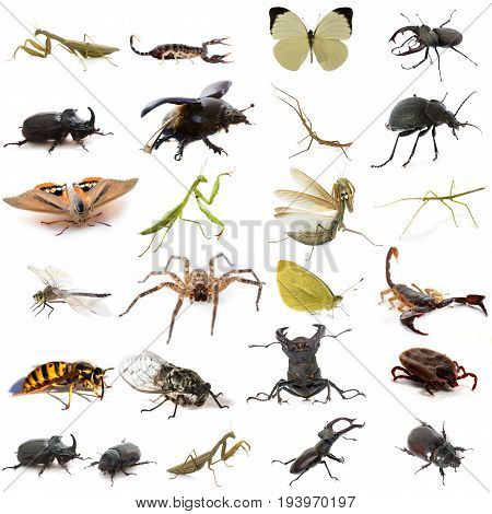 group of european insects in front of white background