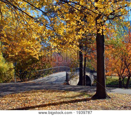 Autumn On Boston Esplanade