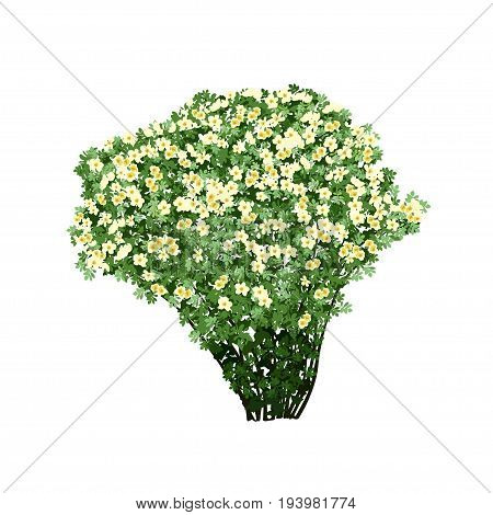 Big bush of a dogrose (Rosa majalis) with white flowers the color vector image on a white background