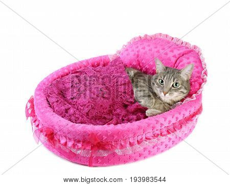 Gray cat laying on a  pink soft bed