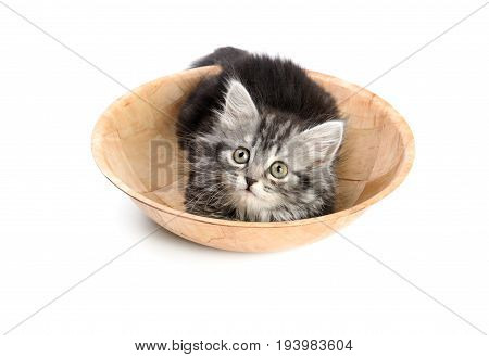 Beautiful gray kitten sitting inside a bamboo plate