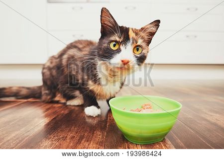 The Hungry Cat Eating From Bowl