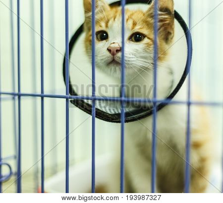The sick cat collar with a sad expression.