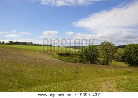 summer scenery with fields trees and hedgerows in the yorkshire wolds under a blue sky with white cloud