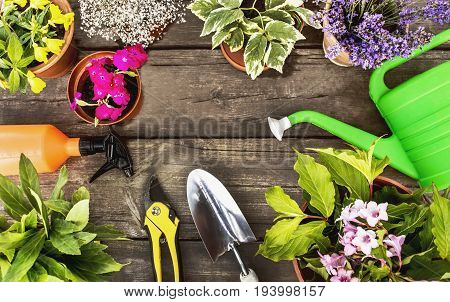 Flowers in a pot and garden tools on a wooden surface