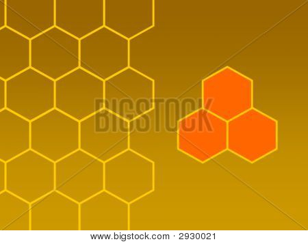 Bees Honeycombs Focus Right